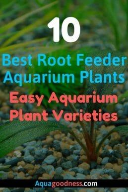 Best Root Feeder Aquarium Plants